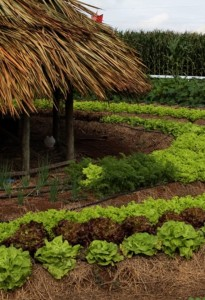 Agricultores apostam em cultivo orgânico para vendas ao PAA
