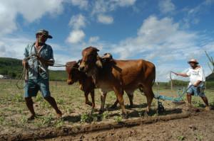 Trabalhadores Rurais preparam  a terra para o plantio Sertao do Pajeu - PE
